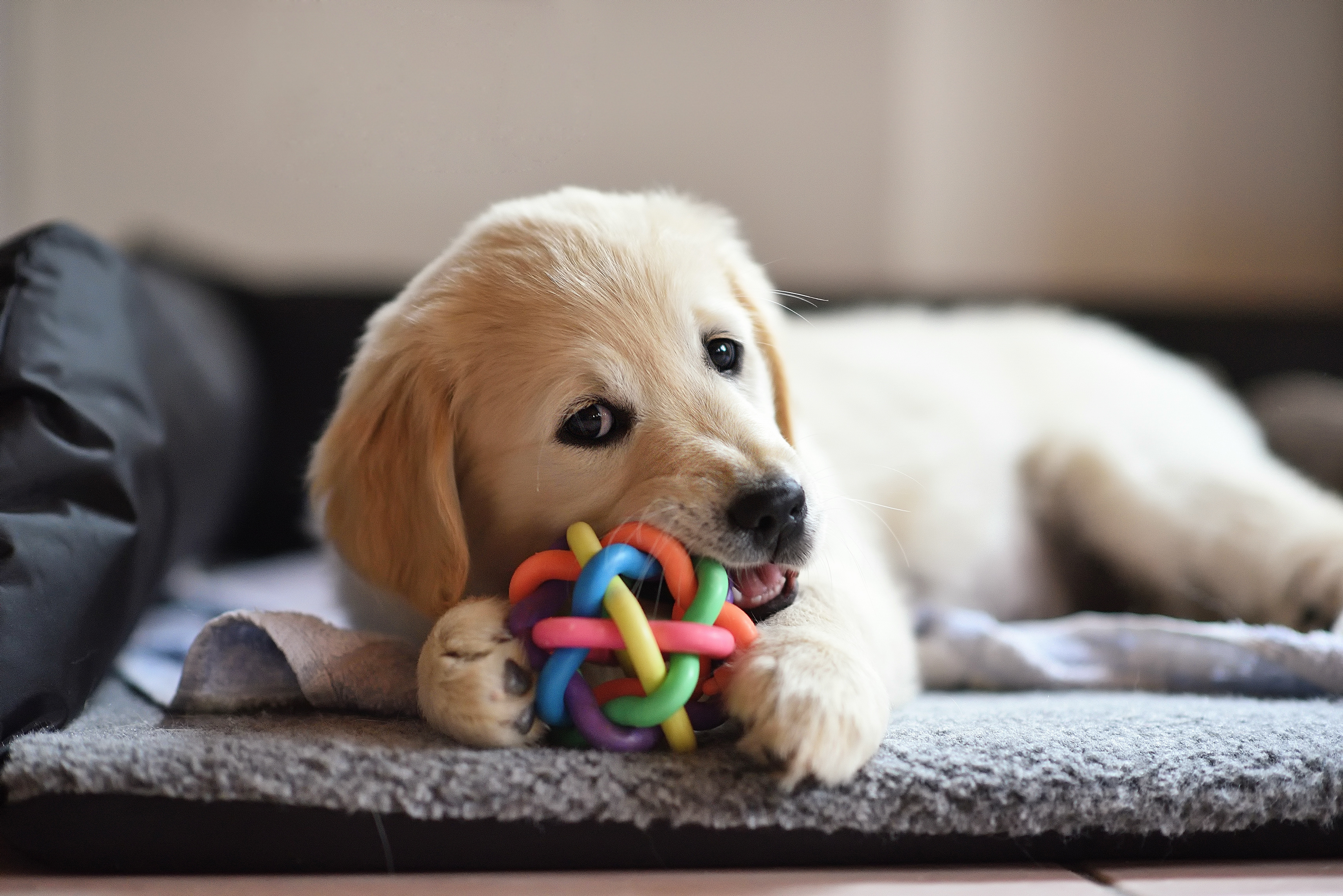 Overview About The Best Pet Store